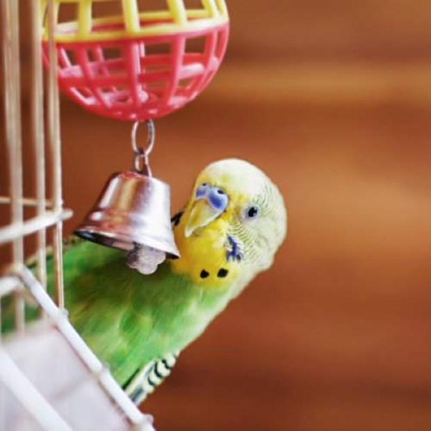 Can birds get pet insurance?